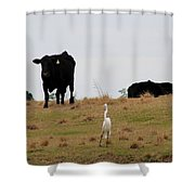 Excuse Me. Do You Speak Moo Shower Curtain