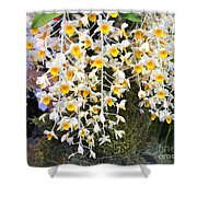 Exotic Aerides Shower Curtain