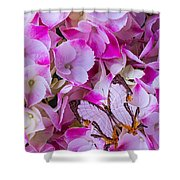 Exotic Butterfly On Hydrangea Shower Curtain