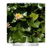 Exotic Colored Waterlilies In The Hot Mediterranean Sun Shower Curtain