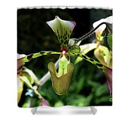 Exotic Ladyslipper Shower Curtain
