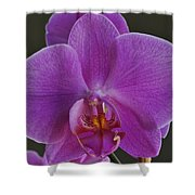 Exotic Orchid 2 Shower Curtain