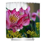 Exotic Pink Shower Curtain