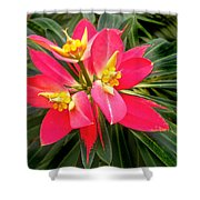 Exotic Red Flower Shower Curtain