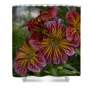 Exotic Spring Flowers Shower Curtain