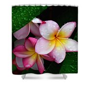 Exotic Tears  Shower Curtain