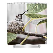 Expectant Mother Shower Curtain