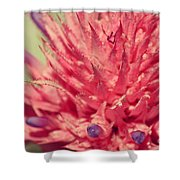 Exploding Pink Flower Shower Curtain
