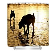 Exploring At Sunset Shower Curtain