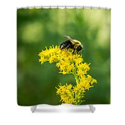 Exploring Goldenrod 2 Shower Curtain