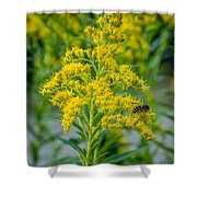 Exploring Goldenrod 3 Shower Curtain