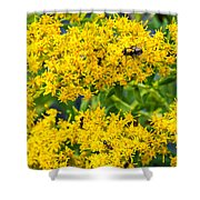 Exploring Goldenrod 5 Shower Curtain