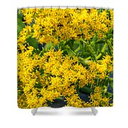 Exploring Goldenrod 6 Shower Curtain