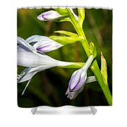 Exploring Hostas Shower Curtain