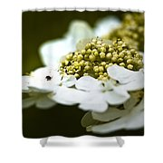 Exploring The Flowers Shower Curtain