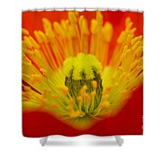 Explosion Of Colour Shower Curtain