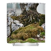 Exposed Roots Shower Curtain