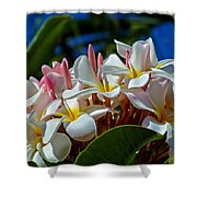 Expressions Of Love - Plumeria Shower Curtain