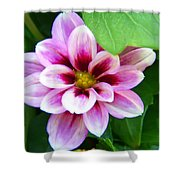 Exquisite Shower Curtain by Aimee L Maher Photography and Art Visit ALMGallerydotcom