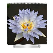 Exquisite Lavender Waterlily Shower Curtain