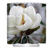 Exquisite Magnolia Shower Curtain
