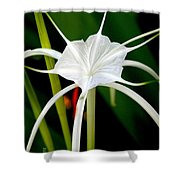 Exquisite Spider Lily Shower Curtain