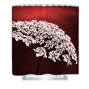 Exquisitely Made Shower Curtain
