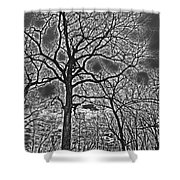 Extreme Contrast Bare Trees During Winter Photograph Shower Curtain