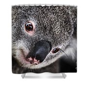 Eye Am Watching You - Koala Shower Curtain