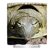 Eye Liner Turtle 8494 Shower Curtain