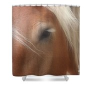 Eye Of A Belgian Horse Shower Curtain