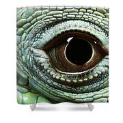 Eye Of A Common Iguana Iguana Iguana Shower Curtain