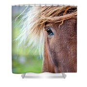 Eye Of A Pony Shower Curtain