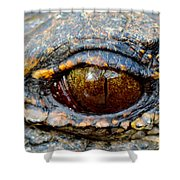 Eye Of The Dragon Shower Curtain