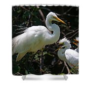 Eye Of The Egret Shower Curtain
