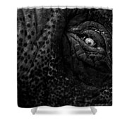 Eye Of The Elephant Shower Curtain by Bob Orsillo