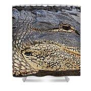 Eye Of The Gator Shower Curtain by Adam Jewell