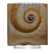 Eye Of The Snail Shower Curtain by Susan Candelario