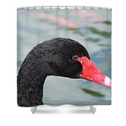 Eye Of The Swan Shower Curtain