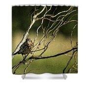 Eye On The Sparrow Shower Curtain