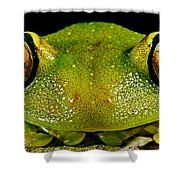 Eye-ringed Bushfrog Shower Curtain