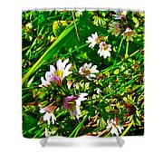 Eyebright On Trout River Trail In Gros Morne Gros Morne National Park-newfoundland  Shower Curtain