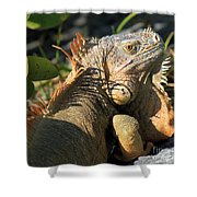 Eyeing The Landscape Shower Curtain