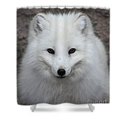 Eyes Of The Arctic Fox Shower Curtain