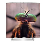 Eyes Of The Robber Fly Shower Curtain
