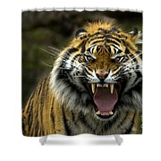 Eyes Of The Tiger Shower Curtain by Mike  Dawson