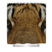 Eyes Of The Tiger Shower Curtain by Sandy Keeton