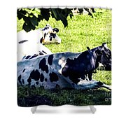 F0040442-9jpg Shower Curtain