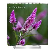 F2 Point 8 1 200th Sec Iso200 Shower Curtain