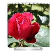 Fabulous Red Rose Shower Curtain